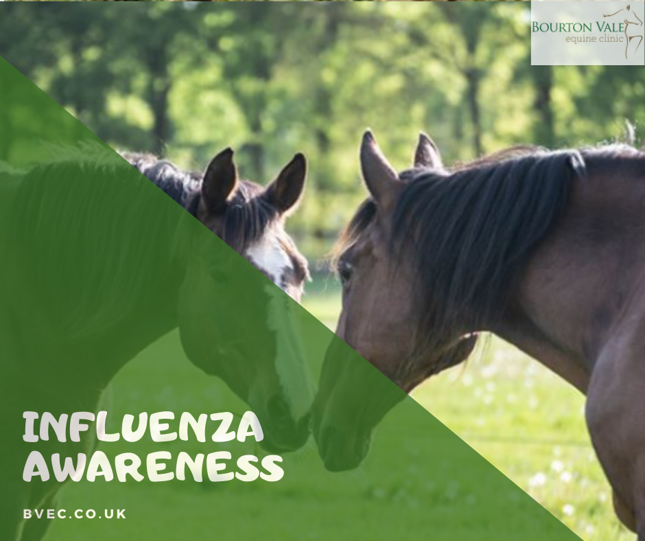 Influenza Awareness